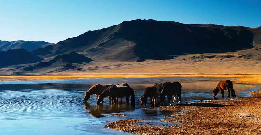 Mongolei Reisetipps Pferde Wildnis
