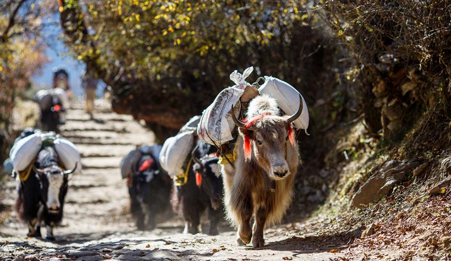 Yak Wanderung in Tibet günstige Angebote für Rundreisen