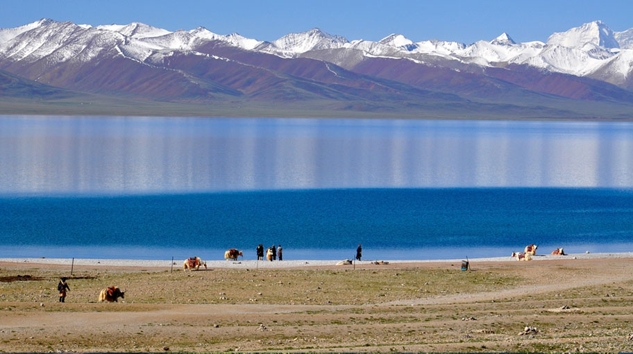 Yak Trekkings durch Tibet
